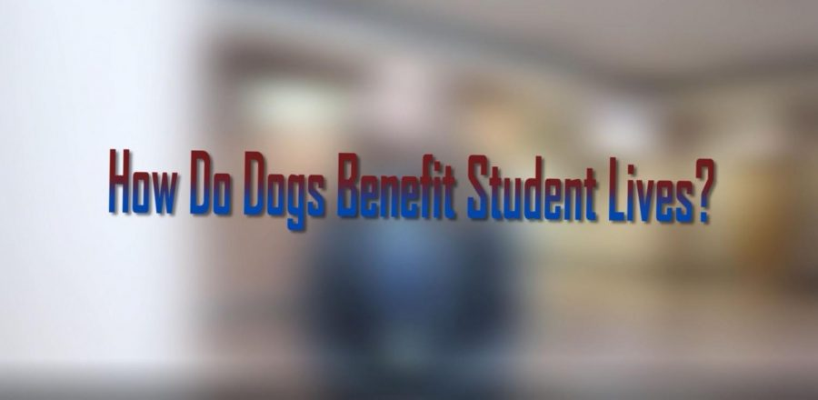 The Benefit of Dogs